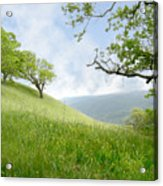 Meadow View Spring Acrylic Print