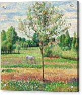 Meadow With Grey Horse, Eragny Acrylic Print