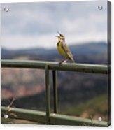 Meadowlark Sings Acrylic Print