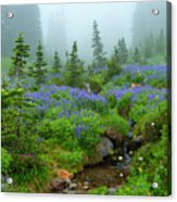 Meadows In The Mist Acrylic Print