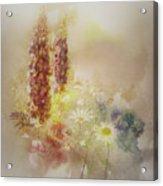 Meadowsweet Acrylic Print