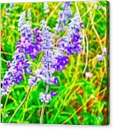 Mealy Blue Sage Acrylic Print