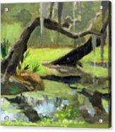 Meditative Swamp Acrylic Print