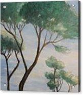 Mediterranean Pines Acrylic Print