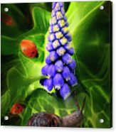 Meet Me At The Hyacinth Acrylic Print