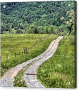 Meet Me At The Tree Acrylic Print by JC Findley