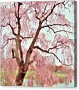 Meet Me Under The Pink Blooms Beside The Pond - Holmdel Park Acrylic Print