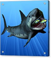 Megalodon Acrylic Print by Corey Ford