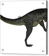 Megalosaurus Dinosaur Roaring, White Acrylic Print