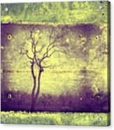 Memories Like Trees Acrylic Print