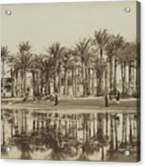 Men With Goats Under Palm Trees On The Water In Bedrechen, Bonfils, C. 1895 - In Or Before 1905 Acrylic Print