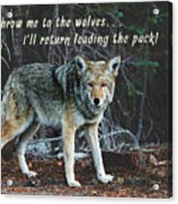 Menacing Wolf In The Woods Lead The Pack Acrylic Print