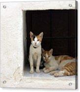 Meow Purr Acrylic Print