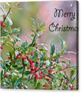 Merry Christmas - Berries Acrylic Print