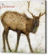 Merry Christmas Elk Greeting Card Acrylic Print