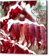 Merry Christmas Red Leaves  Acrylic Print