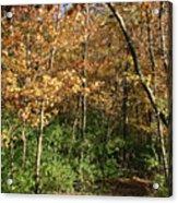 Merwin Autumn Trail Bend Acrylic Print
