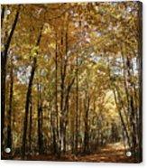 Merwin October Shadows Acrylic Print