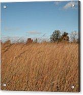 Merwin Prairie Autumn II Acrylic Print