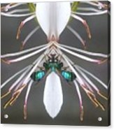 Metallic Bees On Gaura Acrylic Print