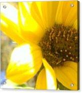 Metallic Green Bee In A Sunflower Acrylic Print