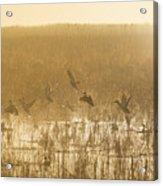 Metzgers Marsh In Fog Acrylic Print