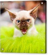 Mew Kitty Funny Mad Face Acrylic Print
