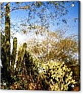 Mexican Country Road Acrylic Print