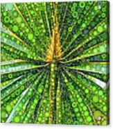 Mexican Fan Palm Leaf Acrylic Print