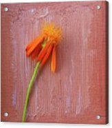 Mexican Flame Acrylic Print