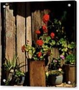 Mexican Geraniums Acrylic Print