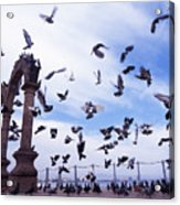 Mexican Pigeon Ruins Acrylic Print