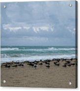 Miami Beach Flock Of Birds Acrylic Print