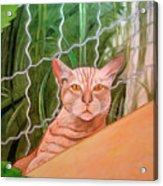 Miami Lewie Acrylic Print