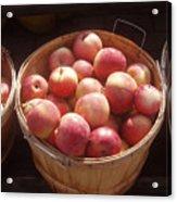Michigan Apples Acrylic Print