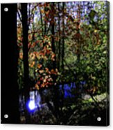 Michigan Fall Colors 1 Acrylic Print