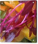 Micro Herbs Acrylic Print