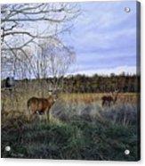 Take Out - Deer Acrylic Print