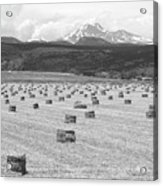 Mid June Colorado Hay  And The Twin Peaks Longs And Meeker Bw Acrylic Print