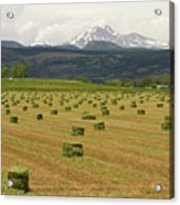 Mid June Colorado Hay  And The Twin Peaks Longs And Meeker Acrylic Print