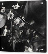 Mid-october Butterfly I Acrylic Print