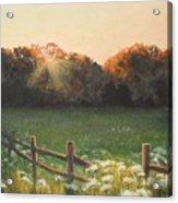Mid-summer Sunset Acrylic Print