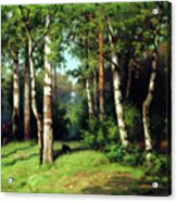 Midday Warmth In A Forest Impressionism Acrylic Print