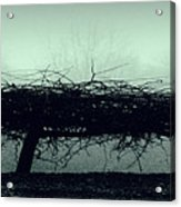 Middlethorpe Tree In Fog Gray And Green Panorama Acrylic Print