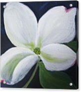 Midnight Blossom Acrylic Print