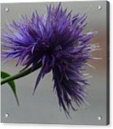 Midnight Blue 16-01 Acrylic Print