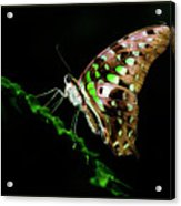 Midnight Butterfly Acrylic Print