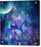 Midnight Butterfly Acrylic Print