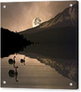 Midnight Moods Swan Lake In The Moonlight Acrylic Print