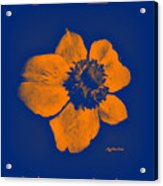 Midnight Orange Passion Flower Acrylic Print